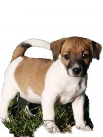 Bea<br><i>Praxishund</i>